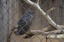 Orange County Zoo (1)
