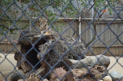 Orange County Zoo (4)