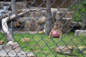 Orange County Zoo