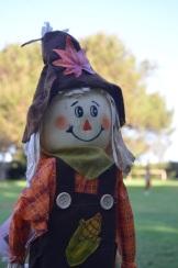 Pumpkin Patch (8)